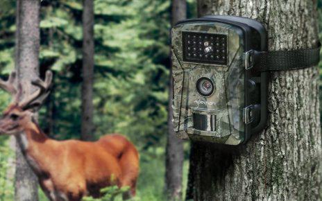 Une caméra de chasse installée dans la nature